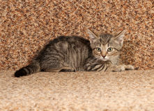 Striped kitten lying on  couch Royalty Free Stock Image