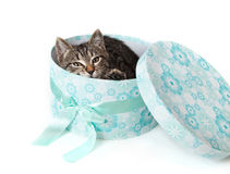 Striped kitten peeking out from blue gift box Royalty Free Stock Photos