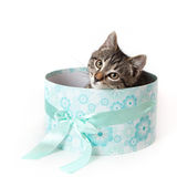 Striped kitten peeking out from blue gift box Stock Photos