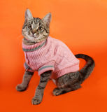 Striped kitten in pink sweater sitting on orange Royalty Free Stock Photography