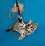 Striped kitten playing on blue Royalty Free Stock Photo