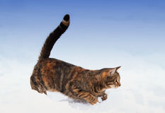 striped kitten playing with snow in winter on the street Royalty Free Stock Image