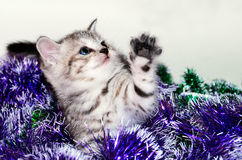 Striped kitten plays with Christmas tinsel. Christmas card Stock Photography