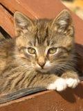 Striped kitten Stock Photo
