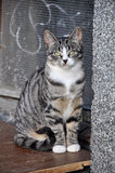 Striped kitten sits near the basement. Small striped kitten sits near the basement Stock Image