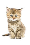 Striped kitten sitting with astonishment looks. In front of him Royalty Free Stock Image