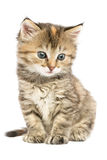 Striped kitten sitting. With astonishment looks in the side down Stock Photo
