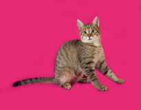 Striped kitten sitting on pink Royalty Free Stock Image