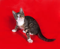 Striped kitten sitting on red Royalty Free Stock Image