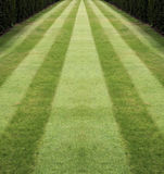 Striped lawn 2 Stock Photo