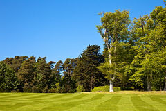 Striped lawn. A beautiful striped lawn with trees in the background Royalty Free Stock Photos