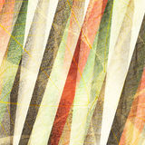 Striped leafs Royalty Free Stock Photography