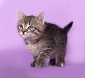 Striped little kitten standing on lilac Royalty Free Stock Photo