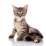 Striped not purebred kitten on a white background. Stock Photo