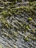 Striped pattern of green moss islands on a stone wall Royalty Free Stock Photos