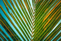 Striped pattern of palm leaf royalty free stock image