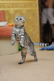 Striped pet Royalty Free Stock Images
