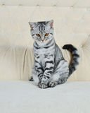 Striped pet Royalty Free Stock Photography