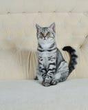 Striped pet Stock Image