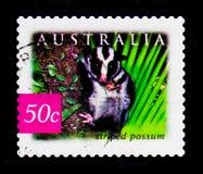 Striped Possum Dactylopsia trivirgata, Nature of Australia - Rainforestsserie, circa 2003 Stock Photography