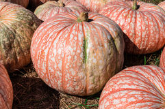 Striped Pumpkin Stock Photos