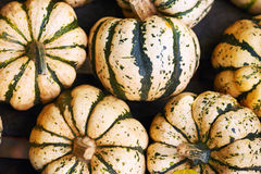 Striped pumpkins Stock Photography