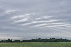 Striped rain cloud,  wheat field and forest in background. Organic crop Royalty Free Stock Photo