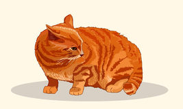 Striped red cat sits fluffed tail. Menacing pose. Dissatisfied cat wags his tail. Favorite pets. Realistic vector Stock Images