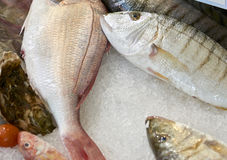 Striped sea bream Royalty Free Stock Image