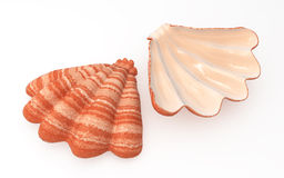 Striped Shell. Striped 3d shells over white, isolated, horizontal Stock Images