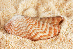 Striped shell on sand Stock Photo