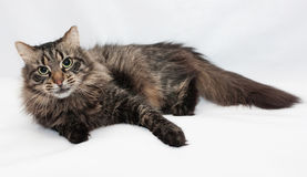 Striped siberian cat lying quietly Stock Photography