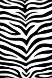 Striped skin Royalty Free Stock Photography