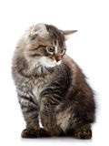 Striped small cat sits Stock Images