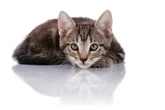 Striped Small kitten hid Stock Photos
