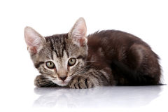 Striped Small kitten hid Stock Photo