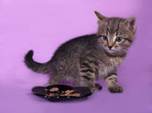 Striped small kitten near bowls with food stands on lilac Stock Image