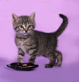 Striped small kitten near bowls with food stands on lilac Stock Photo