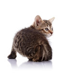 Striped Small kitten Royalty Free Stock Photos