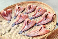 Striped snakehead fish on bamboo threshing basket in air sun for dried, dry striped snakehead fish sun dried, striped snakehead royalty free stock photo