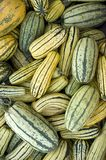 Striped squash Royalty Free Stock Photography