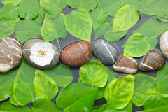 Striped stones with flower in water among the leaves Royalty Free Stock Photo