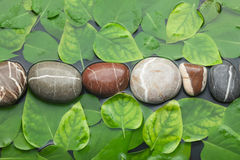 Striped stones and leaves in the water on wet background Stock Images