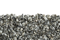 Striped sunflower seeds background Stock Images