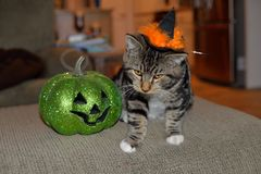 Striped tabby cat wearing black and orange witches hat with his favorite green pumpkin. This is my cat Axel and he loves Halloween. He even likes to wear this royalty free stock photography
