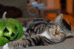 Striped tabby cat wearing black and orange witches hat with his favorite green pumpkin. This is my cat Axel and he loves Halloween. He even likes to wear this stock photos