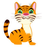 Striped tigress on white background Royalty Free Stock Photography