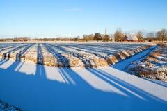 Striped shadows on winter Dutch farmland Stock Photos