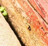 Striped wasp in wooden hole Stock Photography