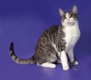 Striped and white cat wrapped with silver beads Christmas sittin Stock Photography